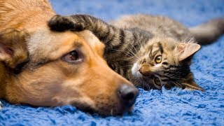 Funny Cat and Dog Videos Compilation | 15 Mins