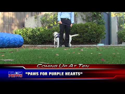 KUSI Evening News Teases Paws for Purple Hearts