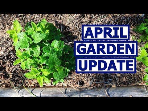 APRIL Garden Update! Spring Plants + Tomato Catastrophe!
