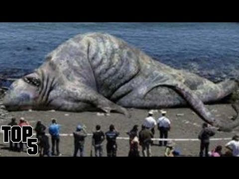 Top 5 Scary Animals That Are Still Alive