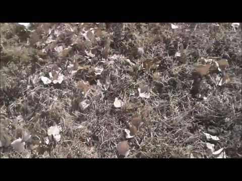 Denver Dog Poop Cleanup Service