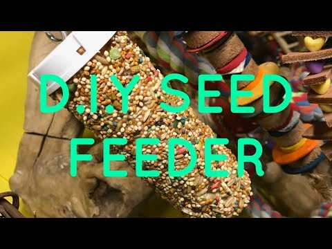 D.I.Y Parrot Seed Feeder