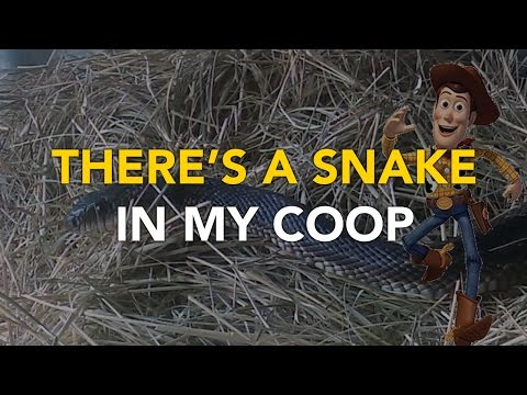 There's a SNAKE in MY CHICKEN COOP - Snake Relocation