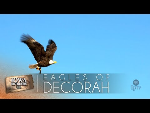EP 708 | The Eagles of Decorah