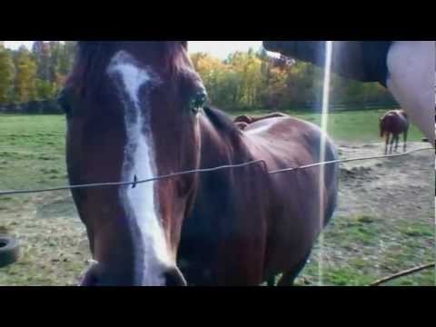 Horse and my arm Electric Fence Shock Oct 1 2012