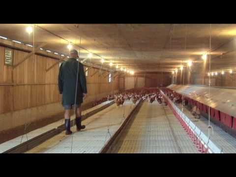Daily Routine -  Free Range Egg Farm  Video