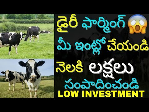 Low Investment High Profit Dairy Farming Business Idea 2018 and Earn | Cattle Farming | in telugu