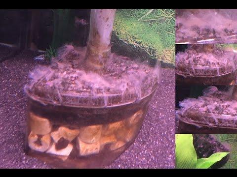 Weird Fungus White Stuff Growing In My Aquarium Fish Tank