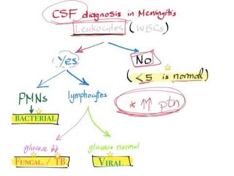 CSF analysis in meningitis algorithm; when Lumbar puncture is necessary