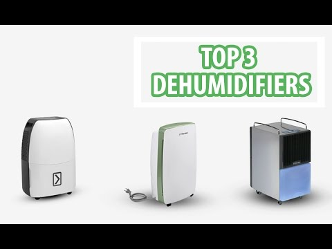 Top 3 Dehumidifiers to reduce mold and fungus - VackerGlobal