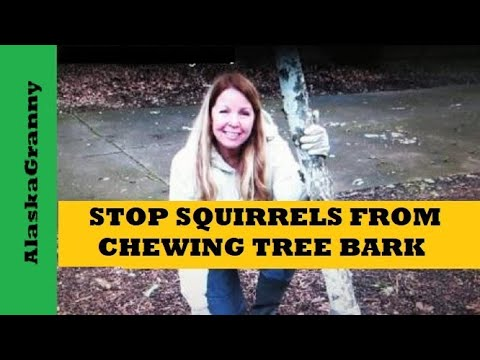 Stop Squirrels And Animals From Chewing Trees