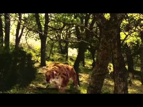 Extinction  Smilodon, The Saber Toothed Tiger   Nature & Animal Documentary Part 1