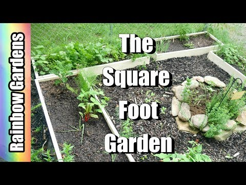 The Square Foot Garden  - Succession Planting, Harvest, YIKES! RABBITS!