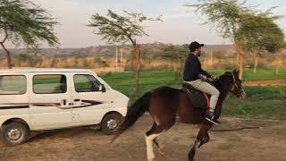 Lifestyle of Mika Singh
