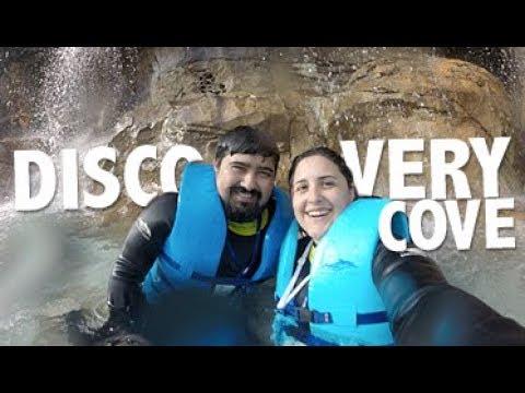 DISCOVERY COVE | Nado com golfinho e mergulho