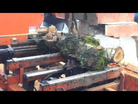 cutting birch burl on a woodmizer