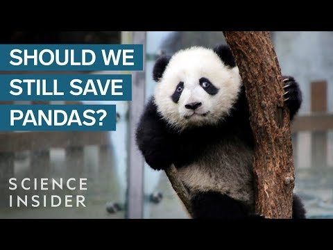 Pandas Are Overrated — Here's Why