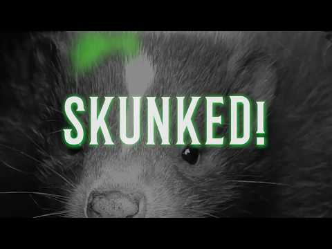 Get Rid of Nasty Skunk Odors