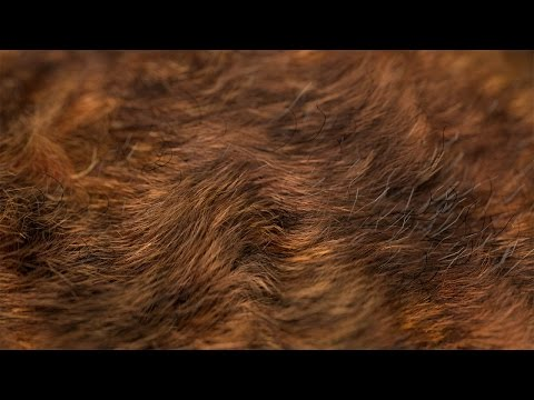 The Secrets to Realistic Fur in Blender