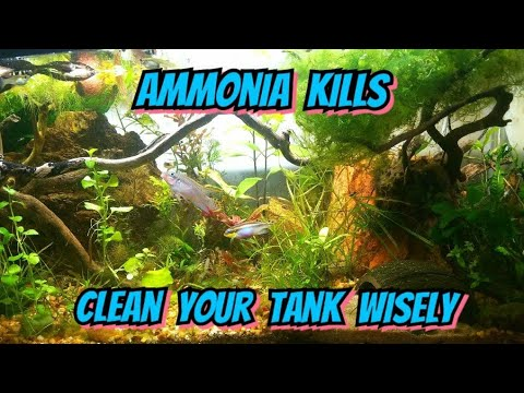 Tipsy Friday - Dangers of Cleaning Your Tank Glass w/ Windex & A Look at my Jungle Style Aquacape