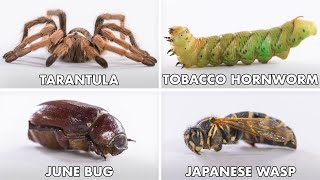 How To Eat Every Insect | Method Mastery | Epicurious