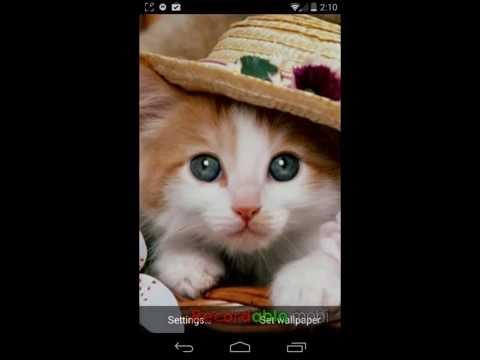 Best Wallpapers for Galaxy-Galaxy s4 Kittens Wallpaper