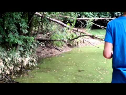 Catching Bullfrogs with a Fishing Pole