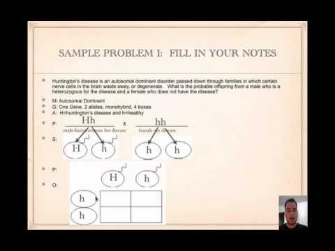 How to Solve Punnett Squares Tutorial