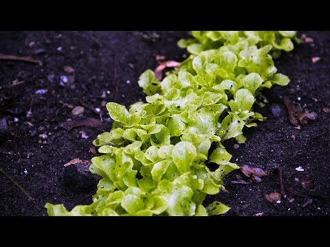 Grow 5-10x More Greens in The Same Amount of Space!