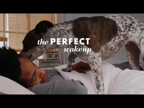 The Perfect Bed by Wamsutta PimaCott