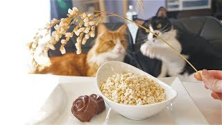 Popcorn Rice