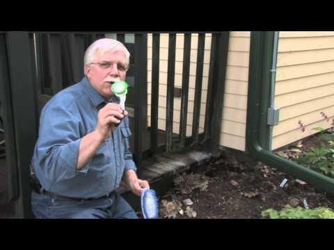 Stain Solver Removes Algae