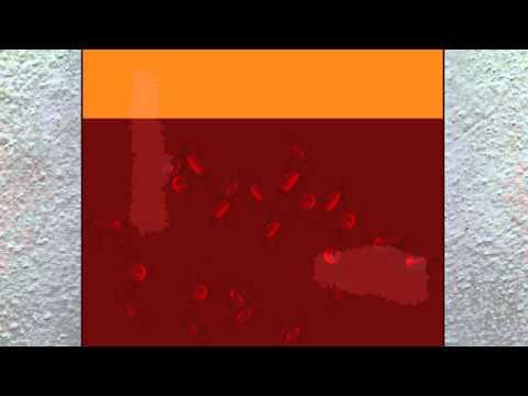 Protein Blood