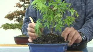It's easy to create your First Bonsai.