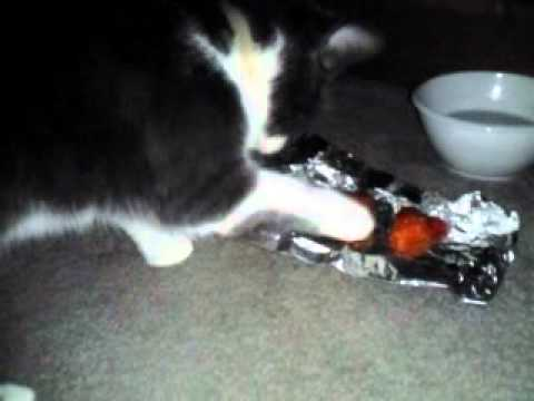 Kitty eats/plays with sweet and sour chicken