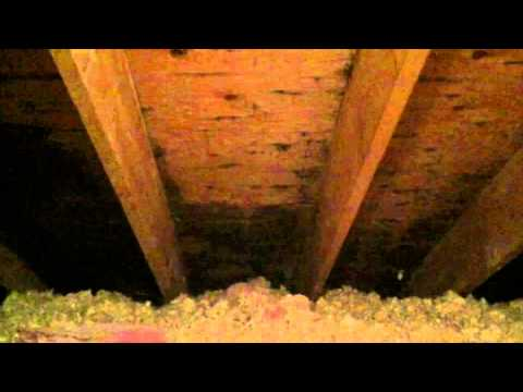 Catching An Attic Mold Problem During The Sale Of A Home Streamwood, IL