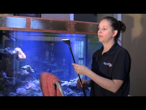 How to Clean an Aquarium / Tank like a Professional 水族館