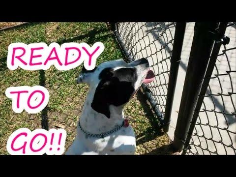 ROCKO   DOG PARK   READY TO GO