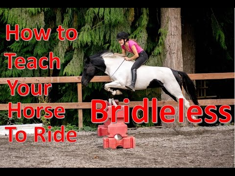 How to Teach Your Horse to Ride TACKLESS