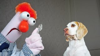 Funny Dogs vs Mad Scientist: Funny Dogs Maymo & Potpie