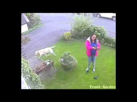 Stranger walking their dog in my garden.
