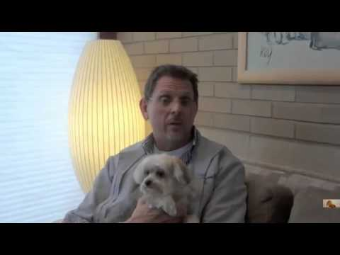 what are symptoms of kennel cough