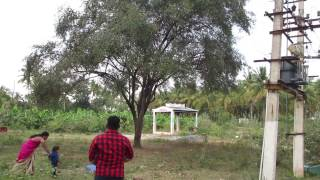 Picking Rare BER FRUIT in My Village | VILLAGE FOOD | NATURE HEALTHY FRUIT