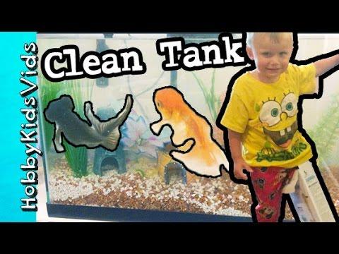 HobbyDad Cleans Fish Tank! HobbyBear Foot Stuck in Box by HobbyKidsVids