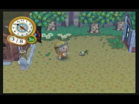 Animal Crossing City Folk - How To Catch Ants & Fly's