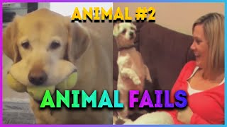 Funny Animal Fails #2 / Best Of The 2020 Fail Compilation