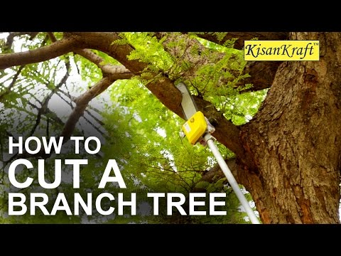How to Cut a Tall Tree Branch with Pole Pruner | Kisankraft