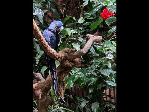 Variety Of Birds from Pittsburgh Aviary