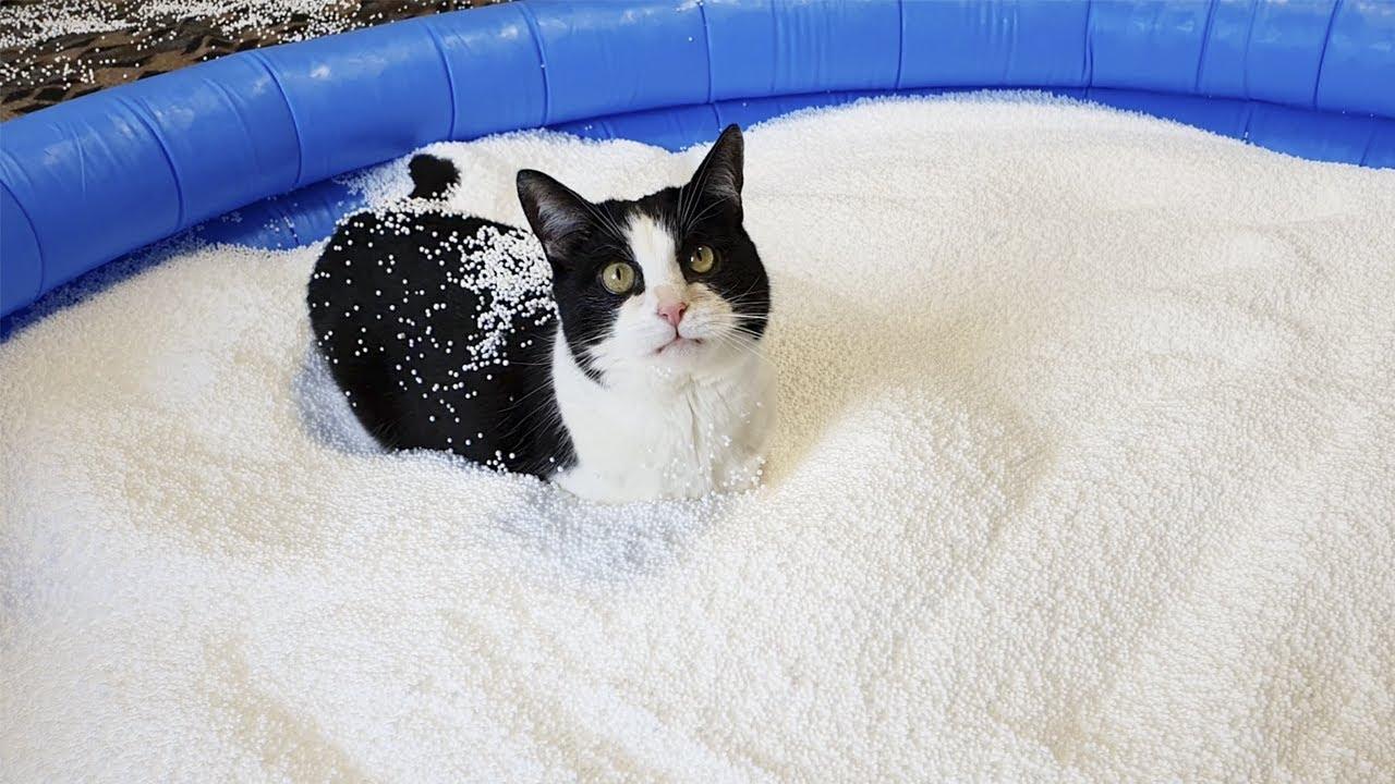 Pool of Bean Bag Filling. Cat's Reaction
