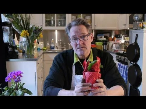 How to Care for a Potted Primrose Inside During the Winter : Tulips, Daffodils & More
